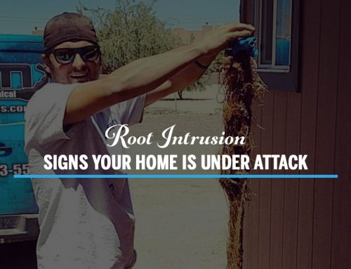 Root Intrusion- Signs Your Home Is Under Attack